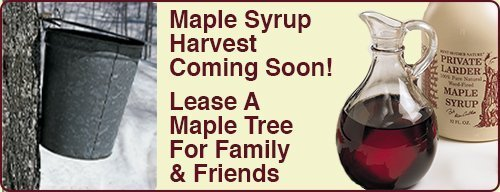 Promotion-Maple-Tree-Lease