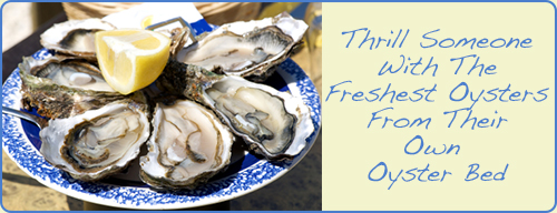 Promotion-Oyster-Bed-Lease